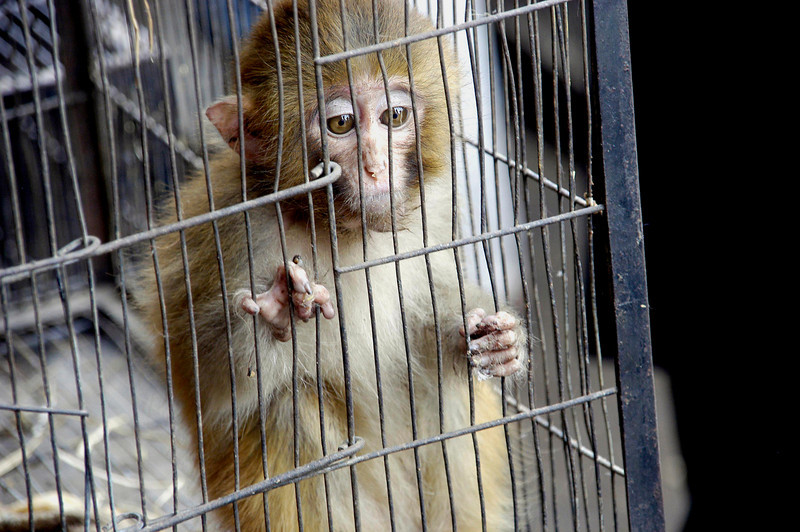 Sad monkey for sale, Karachi, Pakistan<br /> scenes of daily life in markets and bazaars in Karachi<br /> (Credit Image: © Chris Kralik/KEYSTONE Press)