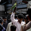 Exotic Birds at the market, Karachi, Pakistan<br /> scenes of daily life in markets and bazaars in Karachi<br /> (Credit Image: © Chris Kralik/KEYSTONE Press)