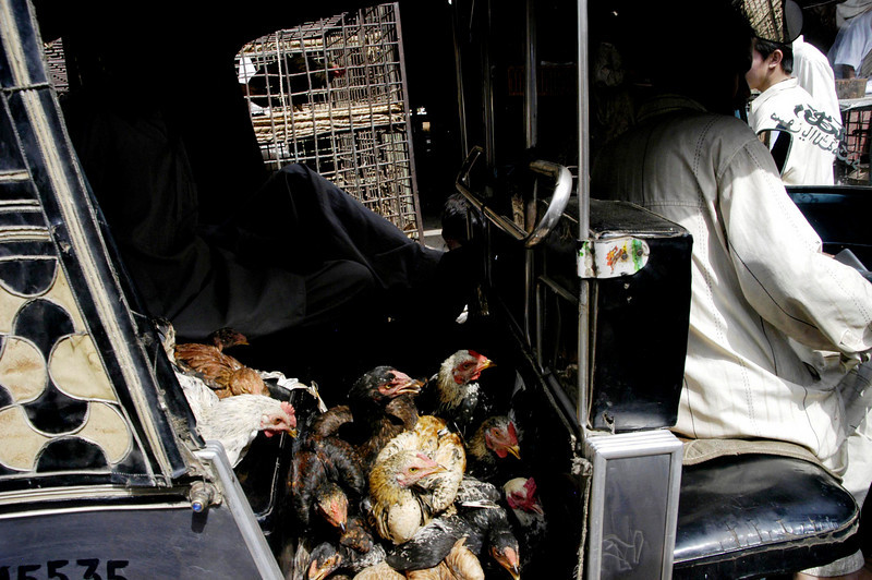 Full load of chickens, Karachi, Pakistan<br /> scenes of daily life in markets and bazaars in Karachi<br /> (Credit Image: © Chris Kralik/KEYSTONE Press)