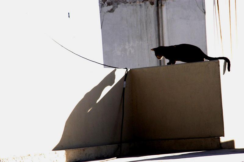 Cat shadow, Karachi, Pakistan<br /> scenes of daily life in markets and bazaars in Karachi<br /> (Credit Image: © Chris Kralik/KEYSTONE Press)