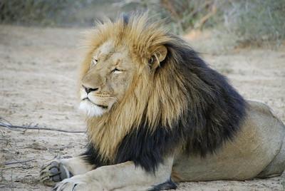 Karongwe Nature Reserve