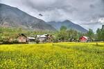 Suchit Nanda's photo