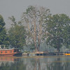 Through the morning mist on Dal Lake