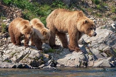 Katmai National Park, coastal brown bears