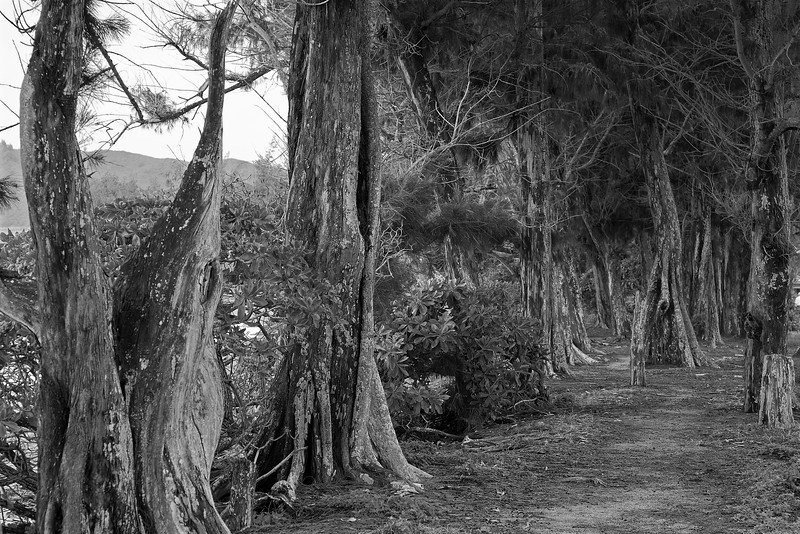 BW Tree lined Path
