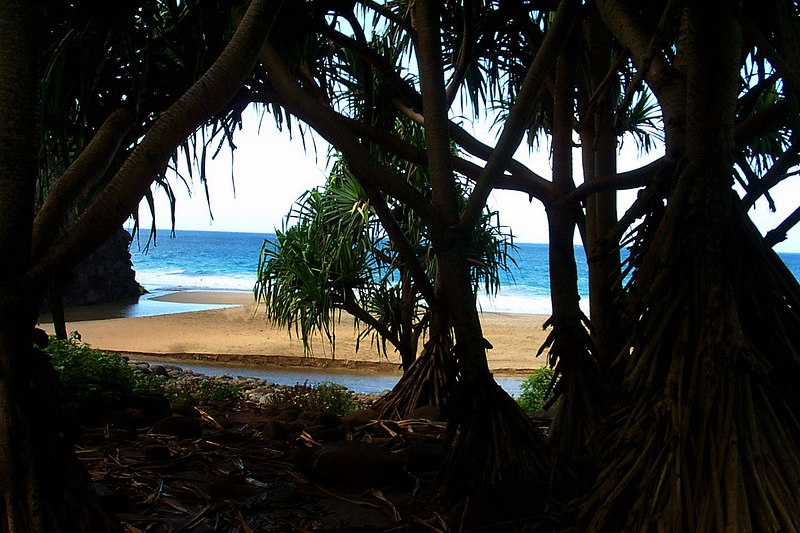 Looking through the trees at the beach. The water in front is the stream.