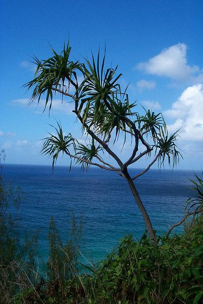 Another ocean view.