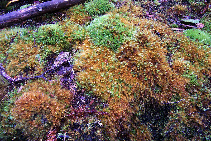 Close up of the moss.