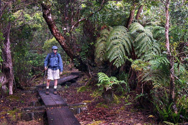 Raining again, but walking on the broadwalk made the rest of the hike easy. Photo by Helen