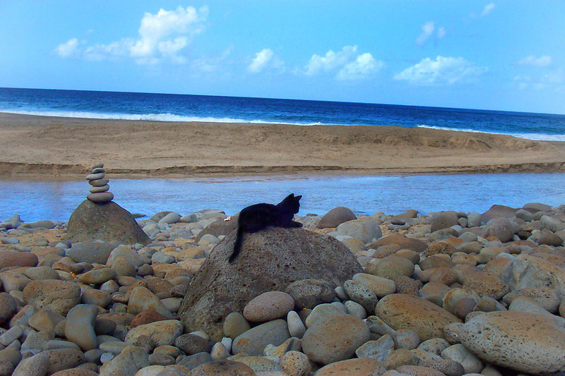 At the beach we found some wild beach kittys. Photo by Helen
