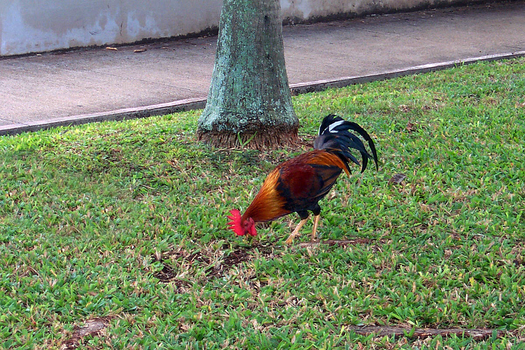 I saw this rooster at the airport while getting the car, didn't think much of it at the time.