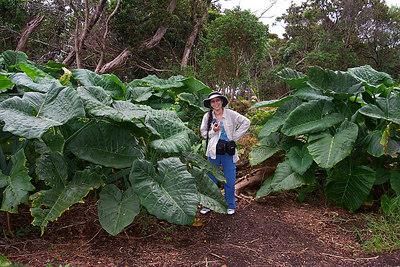 Kauai 11/14/03 - 11/21/03