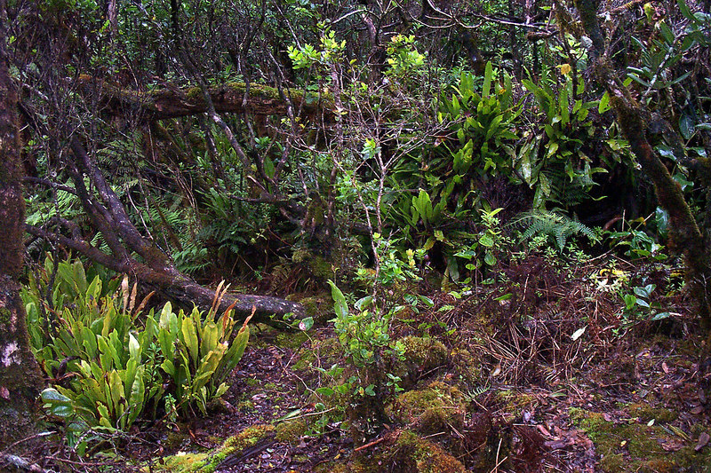 The plant life grows thick around here. No way can you go off trail.