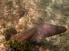 Moray eel at Anini