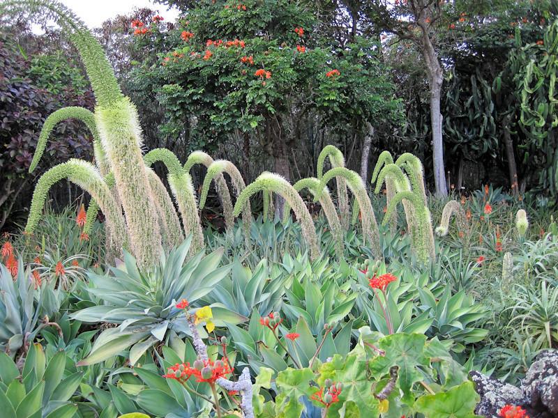 Gardens at Kiahuna Plantation at Poipu
