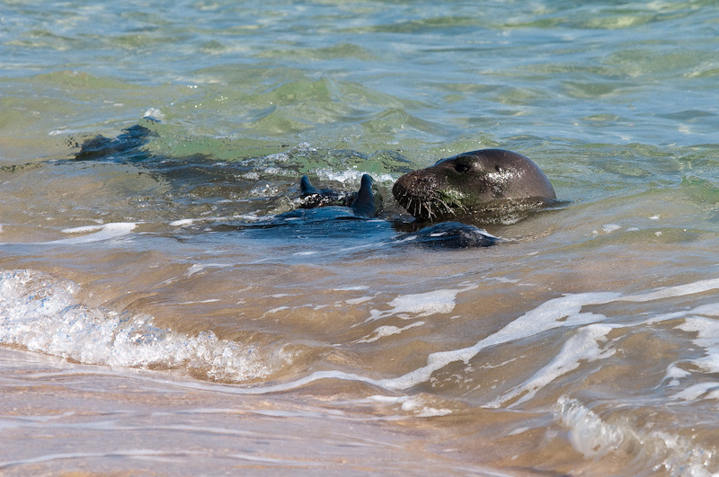 Mom and pup rolling in the surf at Mahaulepu Beach