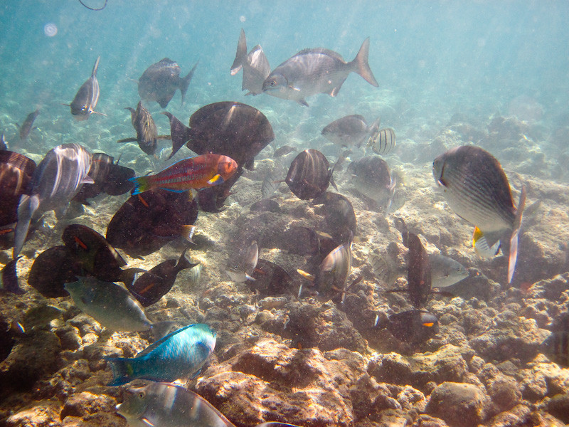 Fish at Poipu Beach
