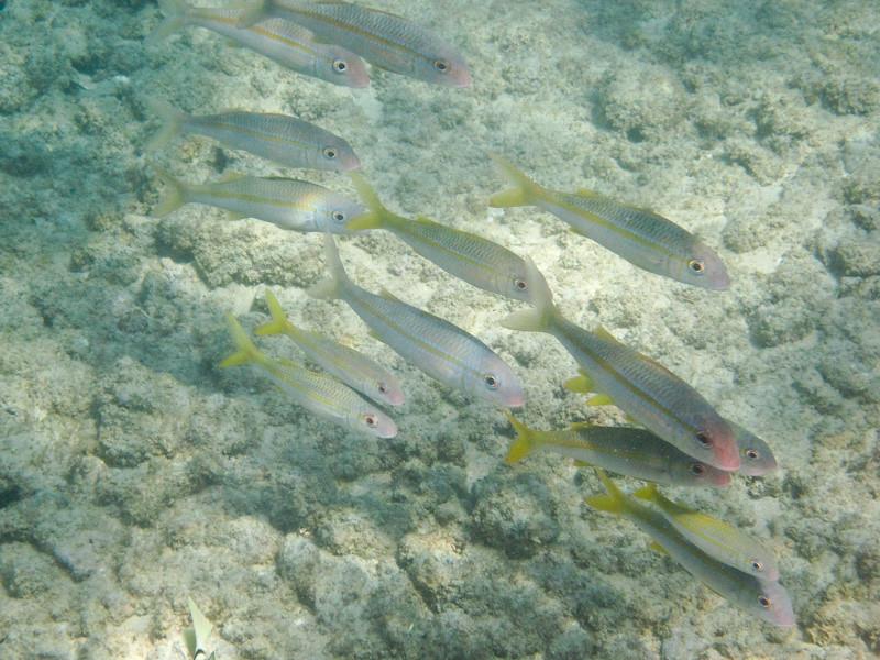 More fish at Mahaulepu Beach