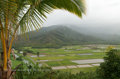 Hanalei Valley in Kauai.