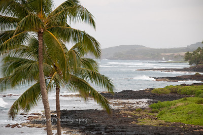 Palm trees and a rocky shore near Poipu Beach, Kauai.
