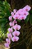 Random orchid.