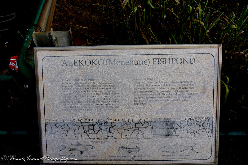 "Also called Alekoko or Niumalu Pond, it is bounded by a wall 900 yards long at a large bend in Hulēʻia River[2] It has been deemed ""the most significant fishpond on Kauai, both in Hawaiian legends and folklore and in the eyes [of] Kauai's people today. It is so old that its construction is attributed to the Menehunes, a mythical people inhabiting Hawaii before the Hawaiians arrived."