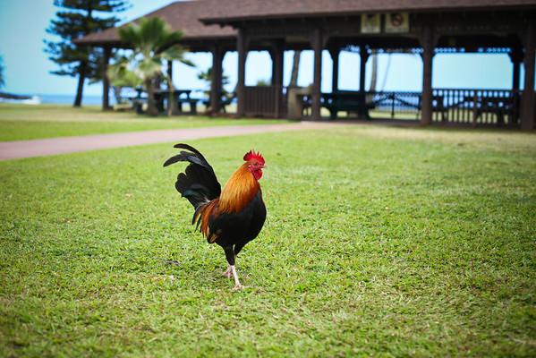 Kauai - Day 1