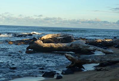 Driftwood on Kauai's Eastern Shore