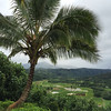 The view from this scenic overlook includes a nature reserve and taro fields.  Kauai is the largest producer of Taro in the Hawaiian Islands.