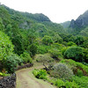 Path, Limahuli Garden