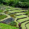 Terraced Landscape, Limahuli Garden