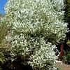"Cactus ""Bush"", Na Aina Kai Botanical Gardens"