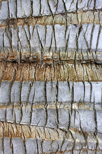 Tree Bark 4, Na Aina Kai Botanical Gardens