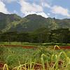 Kauai's rich red soil.