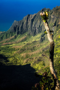 Flowering Tree at Kalalau Valley