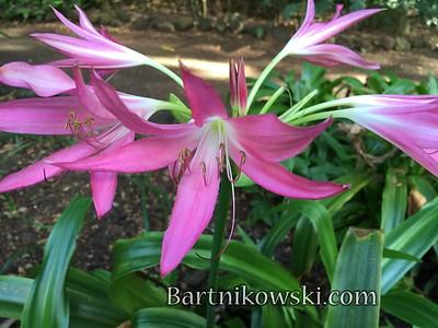 Allerton Garden, National Tropical Botanical Garden, Poipu
