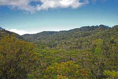 Beautiful vast jungle of MANY different species of trees. This image is the view after you do a 180 degree turn from the view in the previous image.