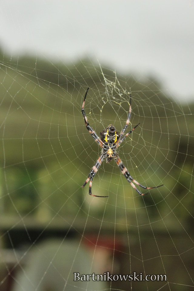 Spider Outside My Window