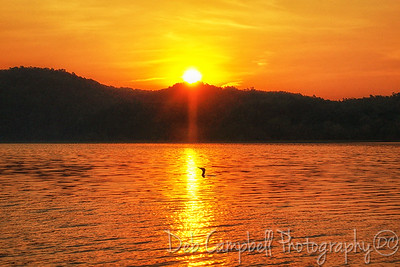 Cormorant at Sunrise