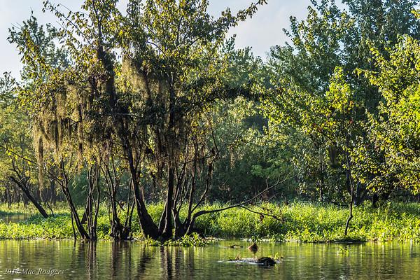 Kayak Bear Branch
