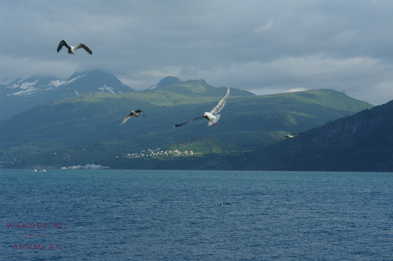 More gulls near the campsite