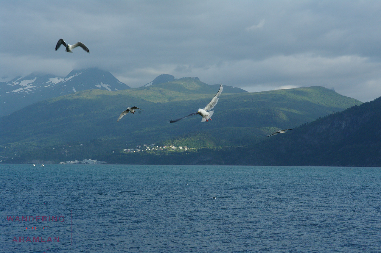 More gulls near the campsite
