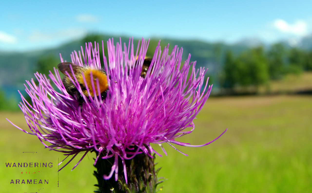 These bees were awesome, and quite willing to hang out for photos