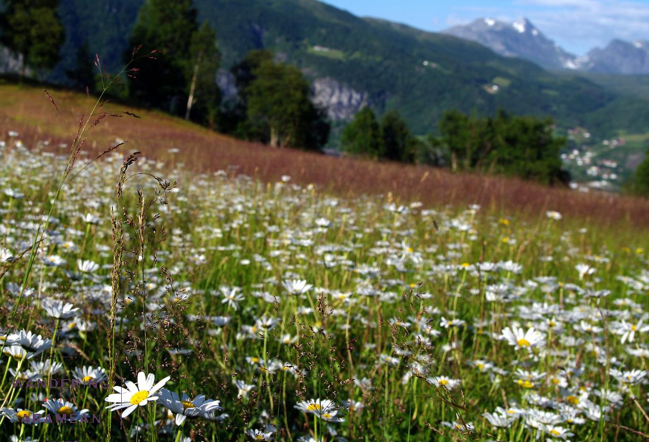 Pretty fields of flowers