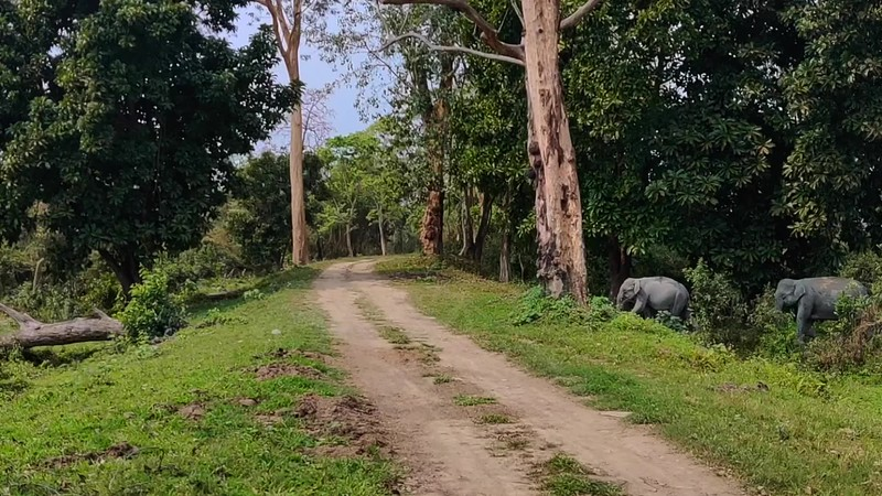 Elephants-catwalk-Kaziranga