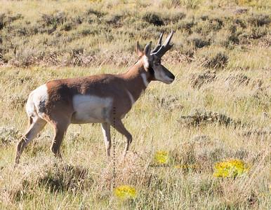 _N9A9456 Deer