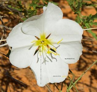 _N9A9090 white flower
