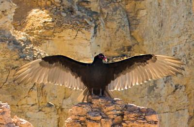 _N9A9267 wing spread