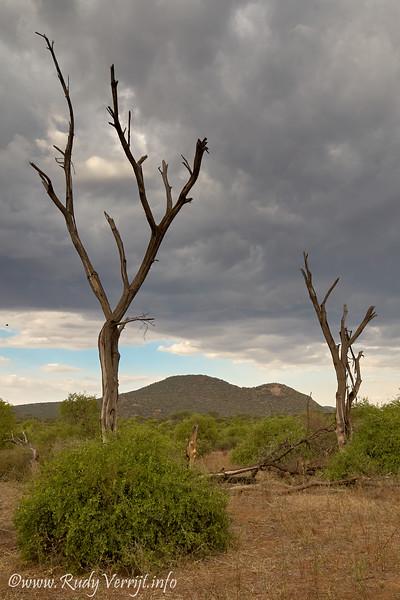 Kenia - Samburu NP - avond drive