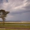 Kenia - Nakuru NP